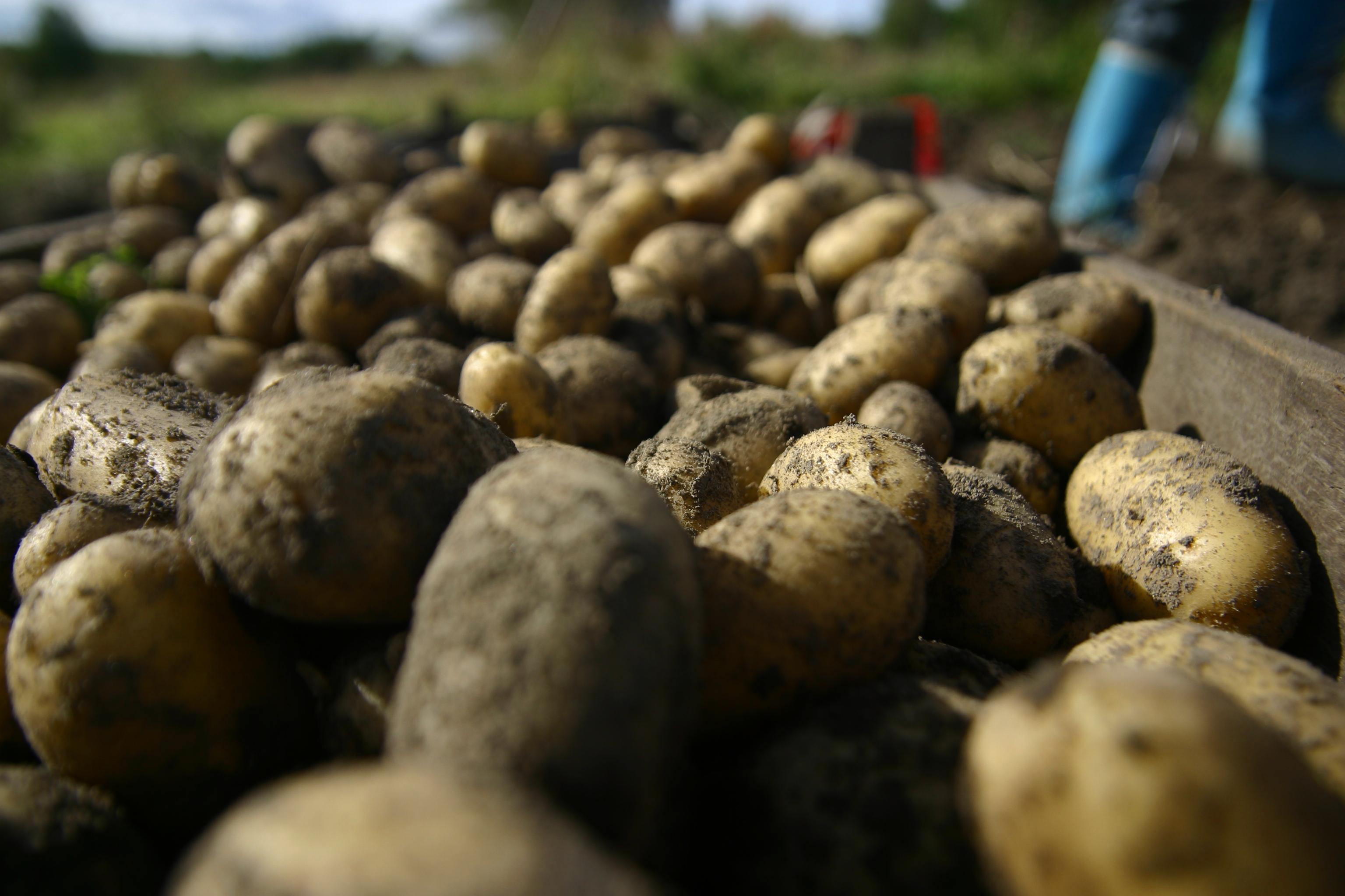 potatoes - Kostråd.NU